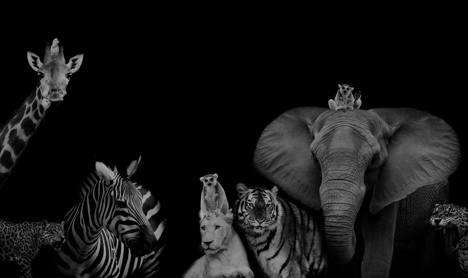articulos_otras_especies_naturaleza_cadena_de_vida