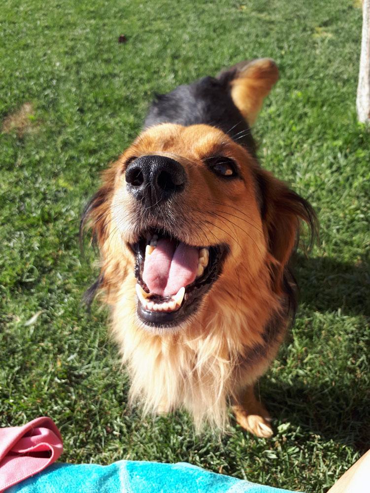 adopciones_perro_mateo