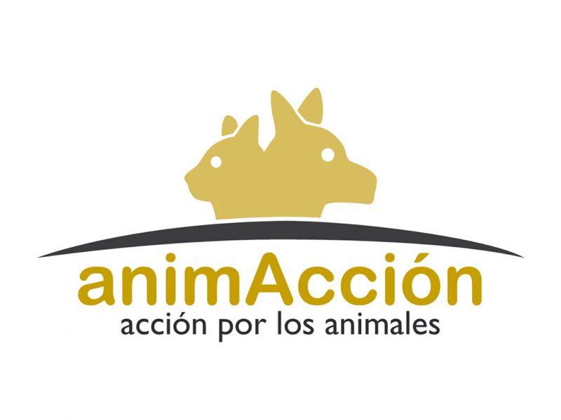 black_acogidas_adopciones_colab_animaccion